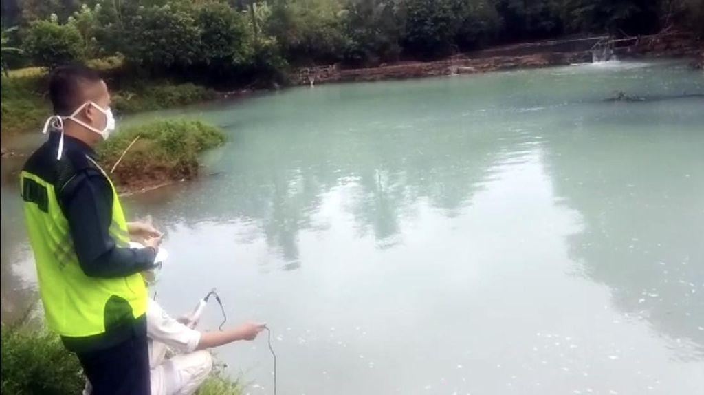 Diduga Tercemar Asam Sulfat, Sejumlah Ikan di Sungai Cikaso Sukabumi Mati
