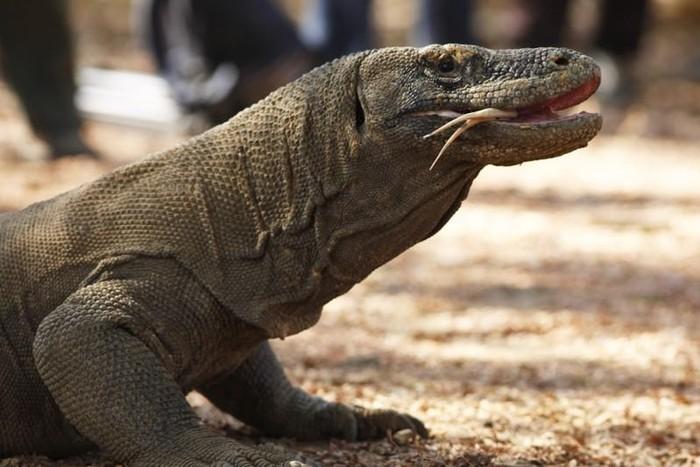 Meski Ada Desakan, Proyek Pembangunan Pariwisata di Taman Nasional Komodo Akan tetap Dilanjutkan