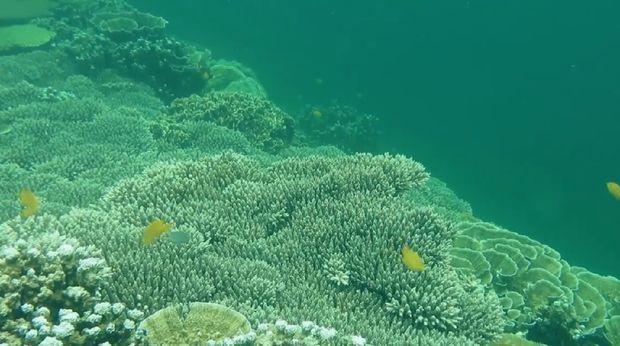 Pulau Karimata (Foto: Tangkapan layar video Rumah Digital Indonesia)
