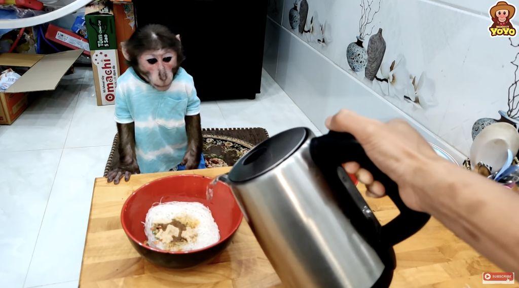 YoYo, YouTuber Monyet yang Pintar Belanja Buah hingga Panen Wortel
