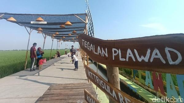 Siapa sangka, tempat nongkrong pemuda kampung di Kampung Plawad, Karawang menjadi spot wisata populer yang banyak dikunjungi warga di pagi dan sore hari. Ide membuat tempat ini berawal dari iseng belaka. (Yuda Febrian Silitonga/detikTravel)
