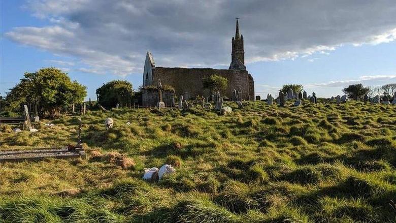 Ratusan kuburan kuno yang terlupakan ditemukan di Irlandia, berkat bantuan domba dan kambing