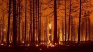 Kebakaran Hutan di California Paksa Ribuan Warga Ngungsi