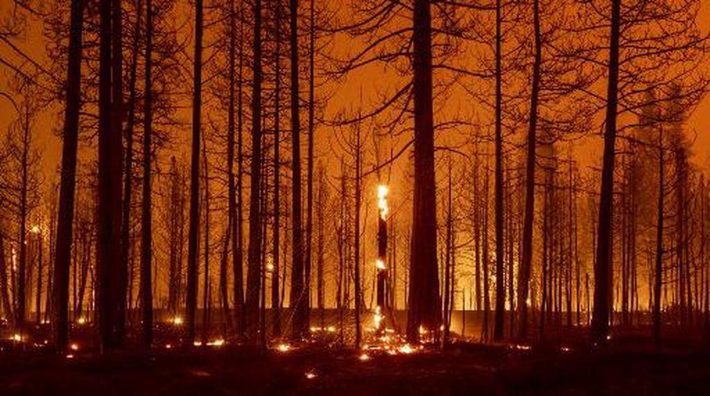 5 Orang Dilaporkan Hilang Pada Kebakaran Hutan di California