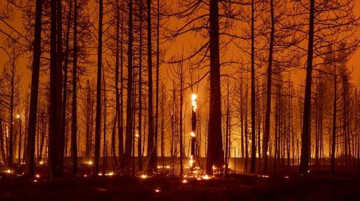 In this long exposure photograph, trees smolder and burn during the Dixie fire near Greenville, California on August 3, 2021. - The Dixie fire has burned more than 250,000 acres and continues to get closer to residential communities. The 2017 Thomas Fire is now only the seventh worst by area destroyed -- and is likely to be overtaken soon by the Dixie Fire raging through the states northern forests, as climate change makes wildfire season longer, hotter and more devastating. (Photo by JOSH EDELSON / AFP)
