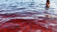 Warnanya Mirip Minuman Soda, Air Laguna di Brazil Ini Jadi Viral