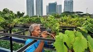 Mahasiswa UB Ajak Masyarakat Lakukan Urban Farming untuk Perkuat Ketahanan Pangan