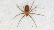 Digigit Laba-laba Bukan Jadi Spiderman, tapi Turis Ini Harus Amputasi Jari-jarinya