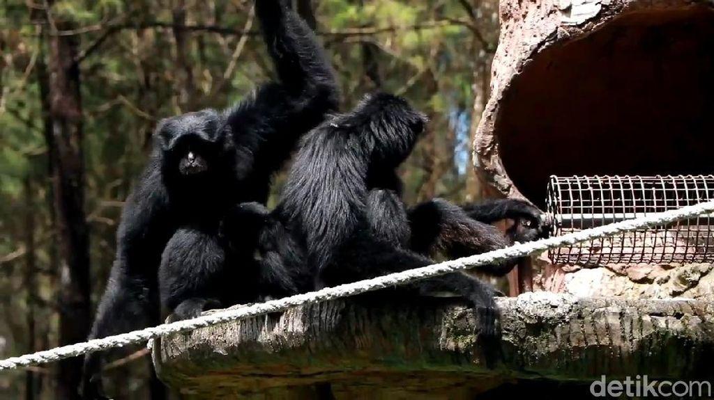 Tutup Selama PPKM, Taman Safari Prigen Buka Donasi untuk Pakan Satwa