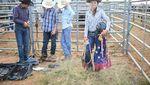 Aksi Berani Para Koboi Menaklukan Banteng Rodeo