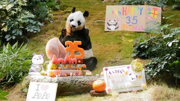 An An lahir di alam liar Sichuan, China pada 1986. Nama An An memiliki arti damai.