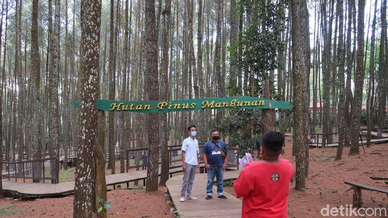 Hutan pinus Mangunan di Bantul, Yogyakarta