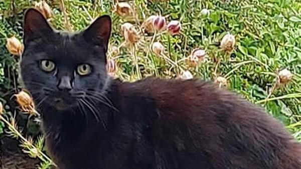 Kucing bernama Piran dianggap pahlawan setelah membantu seorang wanita berusia 83 tahun yang jatuh ke jurang.
