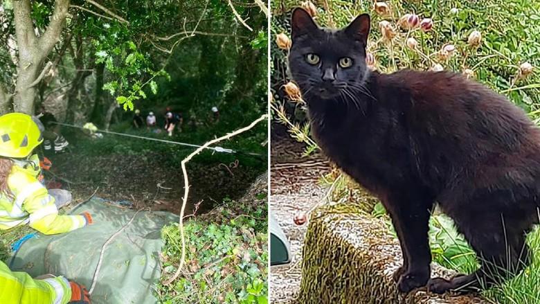 Hebat, Kucing Ini Selamatkan Pemiliknya yang Jatuh ke Jurang