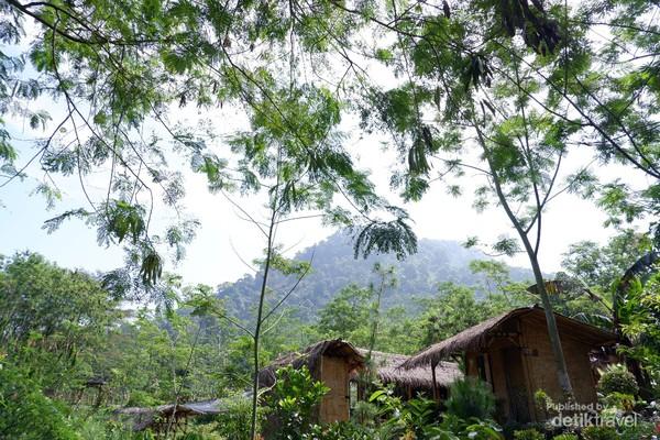 Rindangnya pepohonan di alam Leuwi Pangaduan.