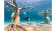 Hutan Bawah Laut di Syprus
