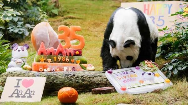 Pasangannya yang bernama Jia-Jia mati di usia 38 tahun. Dia dan Jia Jia datang ke Hong Kong pada tahun 1999.