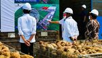 Ini Porang yang Disebut Jokowi Bisa Jadi Pengganti Beras