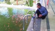 Kolam Renang di Banyuwangi Ini Jadi Kolam Ikan Gegara Pandemi