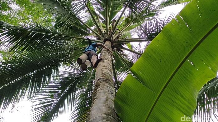 Parjan (51) tunanetra asal Kulon Progo dalam sehari bisa memanjat hingga 20 pohon kelapa untuk menyadap nira. Yuk lihat perjuanganya demi menghidupi keluarga.