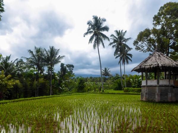Desa wisata Tetebatu juga menyuguhkan beberapa fasilitas penunjang bagi para wisatawan seperti, homestay, dan rumah makan yang mudah dijumpai. (Christopher Moswitzer/iStockphoto)
