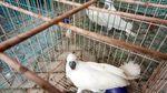 Burung-burung Lucu yang Dilindungi Ini Gagal Diselundupkan