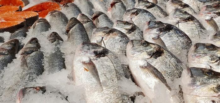 Ini Alasan Mengapa Bangkai Ikan Halal Dikonsumsi