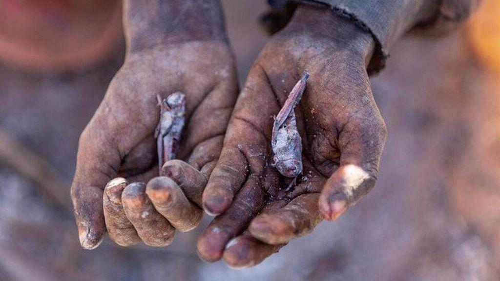Wabah Kelaparan di Madagaskar, Warga Cuma Makan Daun Kaktus-Serangga