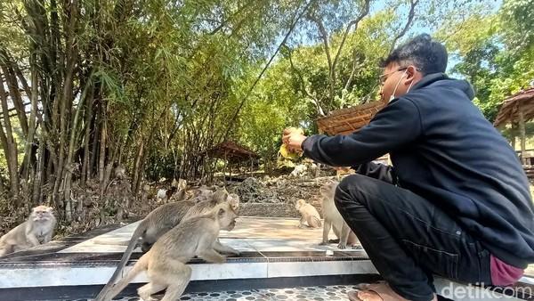 Bukan hanya itu, bagi mereka yang senang dengan binatang atau hewan, bisa menjumpai puluhan monyet. Tidak perlu khawatir, monyet-monyet ini tunduk kepada penjaga kok. (Yuda Febrian Silitonga/detikTravel)