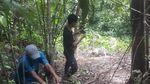 Waduh! 3 Harimau Sumatera Mati Akibat Jebakan Babi