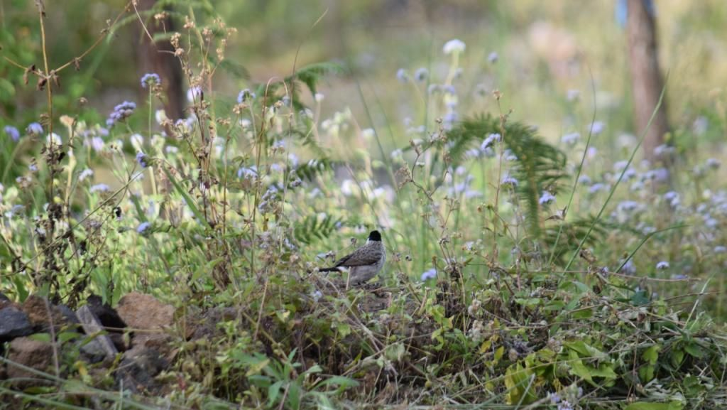 Cantik, Desa di Pasuruan Ini Jadi Habitat Burung-burung Dilindungi