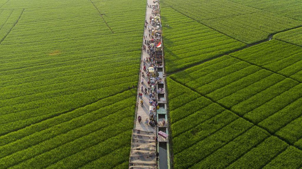 4 Dampak Alih Fungsi Lahan Pertanian Menjadi Permukiman