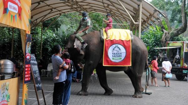 Diketahui Taman Safari Indonesia (TSI) Bogor kembali dibuka untuk wisatawan di tengah penerapan PPKM level 3 di kawasan Bogor.
