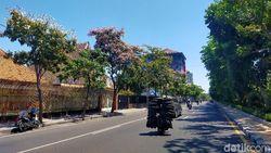 Bunga Tabebuya Mulai Bermekaran di Surabaya