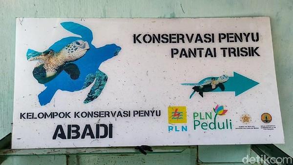Tempat konservasi penyu di Pantai Trisik, Kapanewon Galur, Kulon Progo, DIY, terancam rusak oleh abrasi. Saat ini jarak antara lokasi konservasi dengan bibir pantai hanya tinggal berkisar 5 meter. (Jalu Rahman Dewantara/detikTravel)