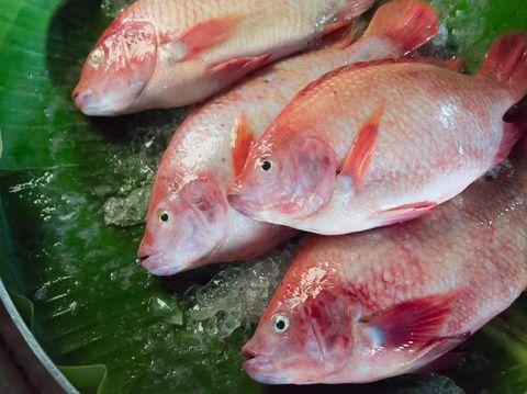 Resep Ikan Kuah Kuning