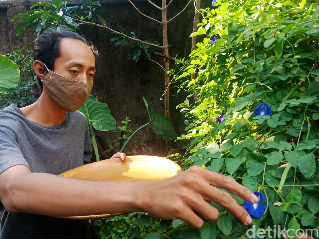 Biru Cantik! Nasi Bunga Telang yang Kaya Khasiat Bisa Dinikmati di Jombang