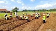 Cegah Penurunan Produksi Pertanian, BMKG Gelar Sekolah Lapang Iklim