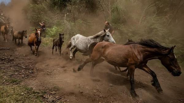 Pada perayaan ini warga Spanyol akan mencari kuda liar yang tinggal di pegunungan dan membawanya ke desa untuk dipotong surainya.