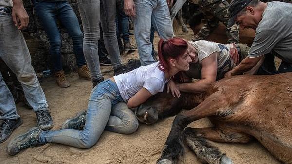 Meski telah diprotes keras dari berbagai organisasi pecinta binatang, Rapa das Bestas masih tetap berjalan.