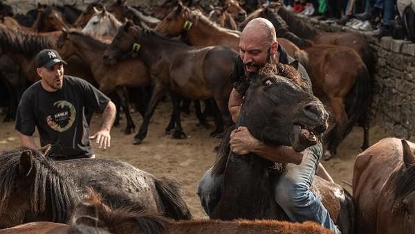 Apalagi banyak aksi menegangkan macam perkelahian antara manusia dan kuda liar.