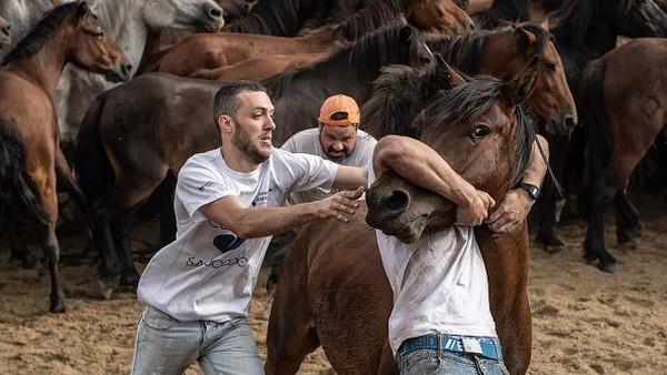 Festival ini berisi tradisi memotong rambut atau surai kuda liar yang hidup di pegunungan Spanyol.