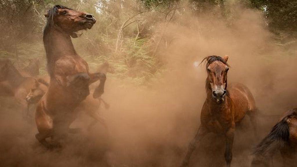 Asal-usul Kuda Modern, dari Kuda Perang hingga Ternak