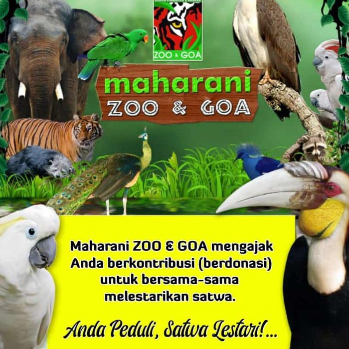 Demi kelangsungan hidup 900 satwa yang ada, Maharani Zoo dan Goa Lamongan (Mazoola) membuka donasi. Pasalnya, selama PPKM tidak ada pemasukan sama sekali.