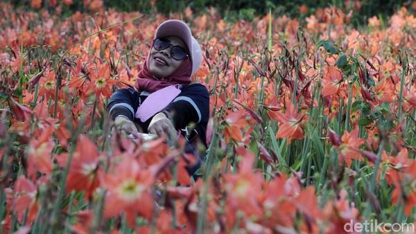 Kebun bunga yang berlokasi di sepanjang Jalan Jogja-Wonosari ini bahkan sempat menjadi primadona wisatawan.
