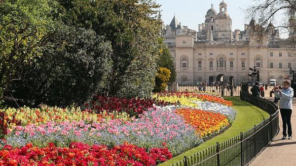 Bunga Tulip juga banyak ditanam untuk mempercantik bangunan bersejarah di Inggris. Getty Images/Oli Scarff
