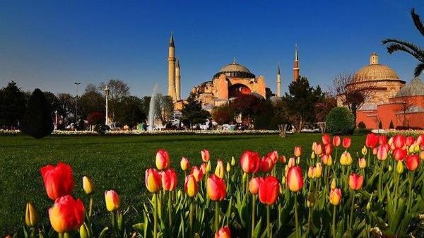 Salah satu landmark di Turki, Masjid Hagia Sophia, menjadi lebih indah saat bunga bermekaran di tamannya. Dok. Thevegetariantraveller