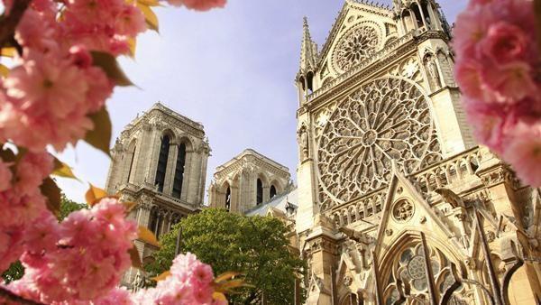 Saat musim semi tiba di Paris, bunga Sakura akan bermekaran di salah satu tempat paling ikonik yaitu Katedral Notre Dame. Dok. USAToday