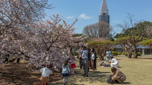 Bunga Sakura juga akan bermekaran di sepanjang jalanan Tokyo, Jepang. Getty Images/Yuichi Yamazaki