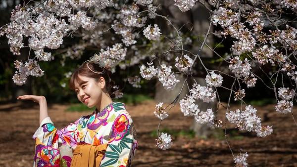 Bunga Sakura yang bermekaran akan menjadi objek paling dinantikan warga Jepang. Getty Images/Yuichi Yamazaki